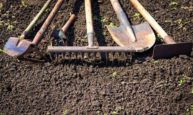 Kışın sarımsak ne zaman ekilir: kısa bir talimat